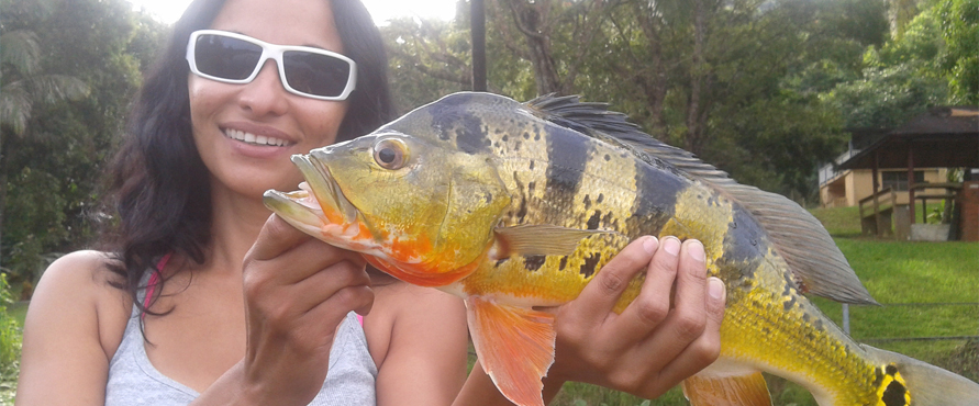 Bass fly fishing in puerto rico for Puerto rico fishing